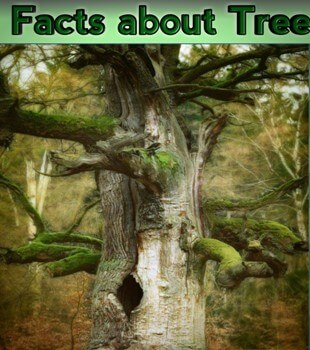 Facts about Tree