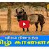 Jalli kattu Kaalai | save Jallikattu | TAMIL NEWS