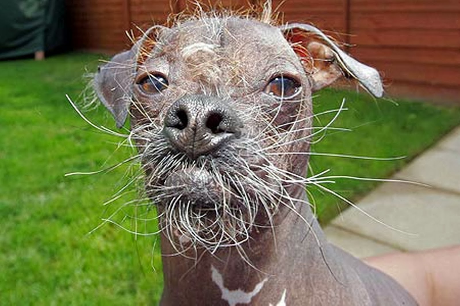 ugly animals ugliest funny dogs cat beards pets baby animal dog puppy cute worlds beard hairless looking cutest insects alpha