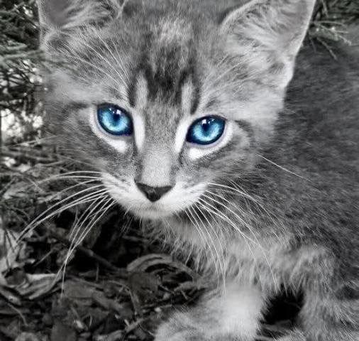 quinn cat fresno