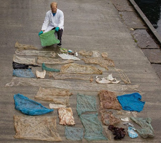 30 bags found inside dead whale