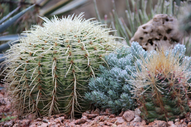 Ice on Cactus