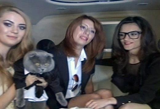 Chú mèo làm…giám đốc truyền thông