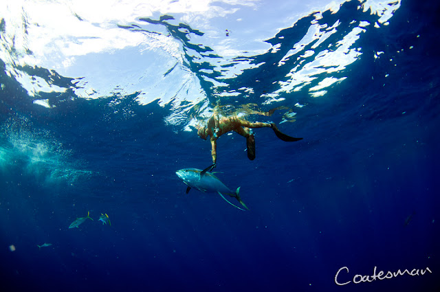 ascension island best free swimming tuna photography