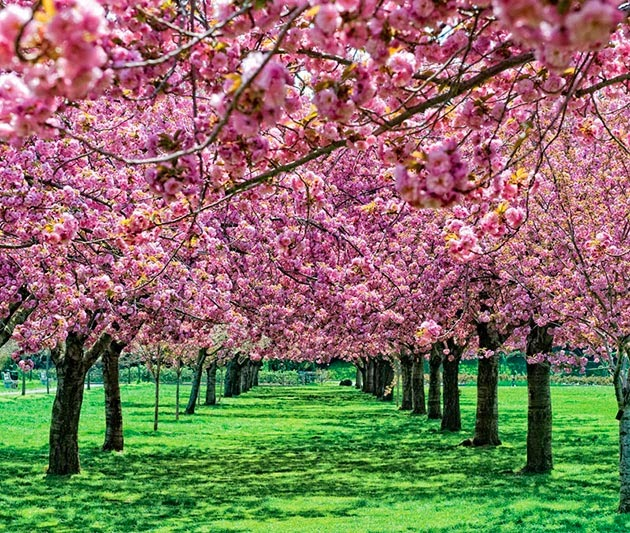 10 Inspirational Botanic Gardens | Brooklyn Botanic Garden, New York, United States