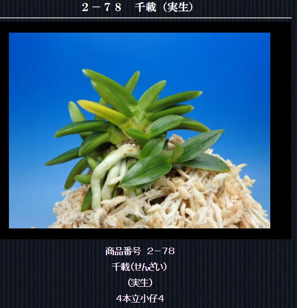 http://www.fuuran.jp/2-78.html