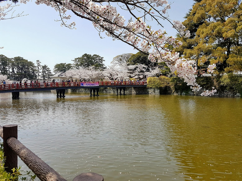学橋與櫻花