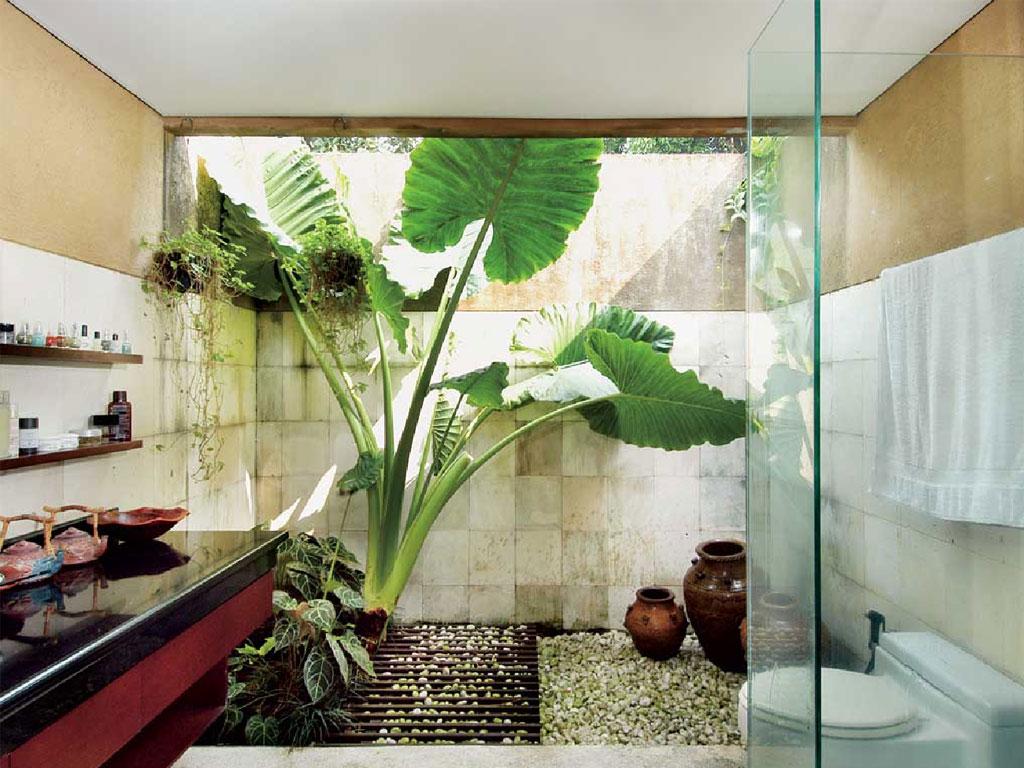 Kamar mandi dengan konsep outdoor ditambah pohon talas ...