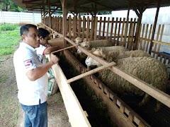 Safin Optimis Jadikan Kota Pati Sentra Peternakan Domba