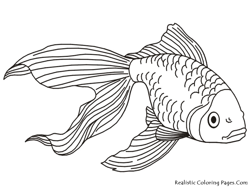 Goldfish coloring pages realistic coloring pages for Color pages of fish