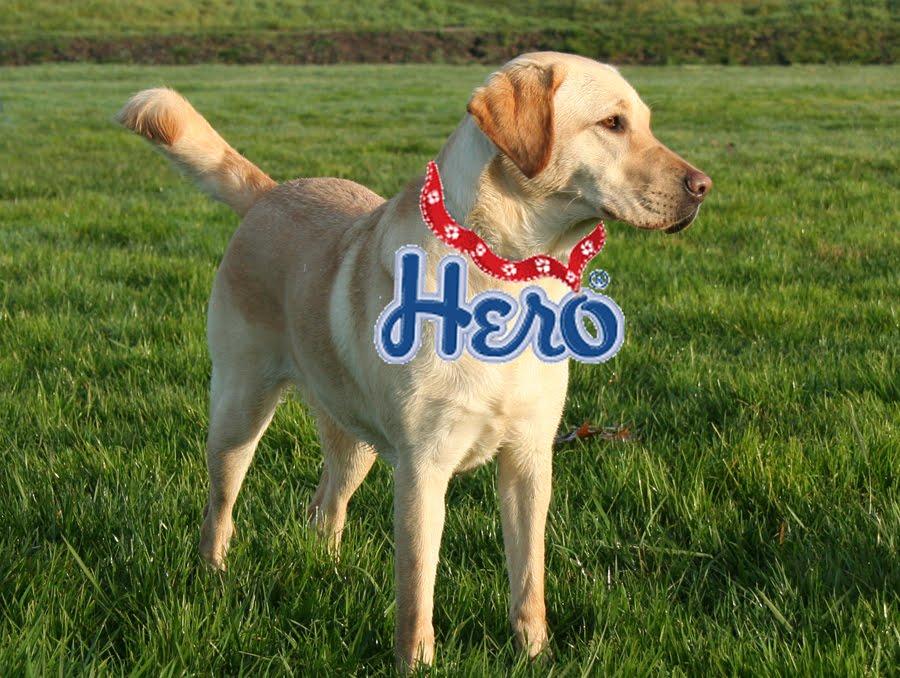 hero dog story