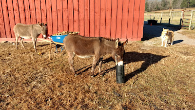 Our Tiny Farm in Western NC: Pictures of Our Mini-Donkeys