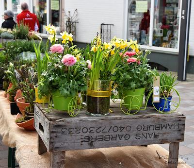 Frühlingsblumen in Meldorf am Dom