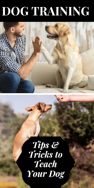 Tips And Tricks to Teach Your Dog