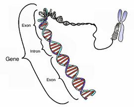 Materi Gen Lengkap