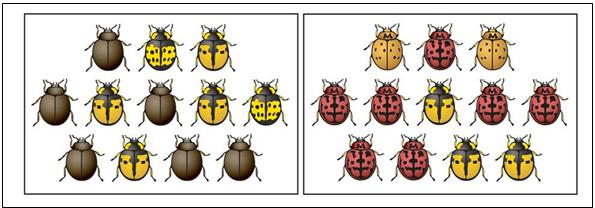 Catatan prestasi Guru Biologi: Evolusi