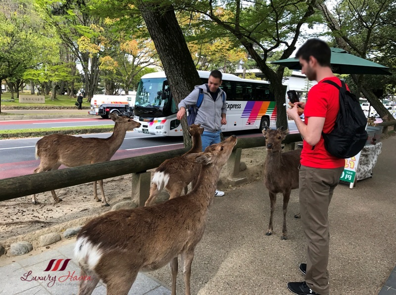 tourists in nara park feeding deer