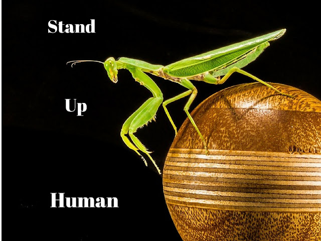Stand Up Human
