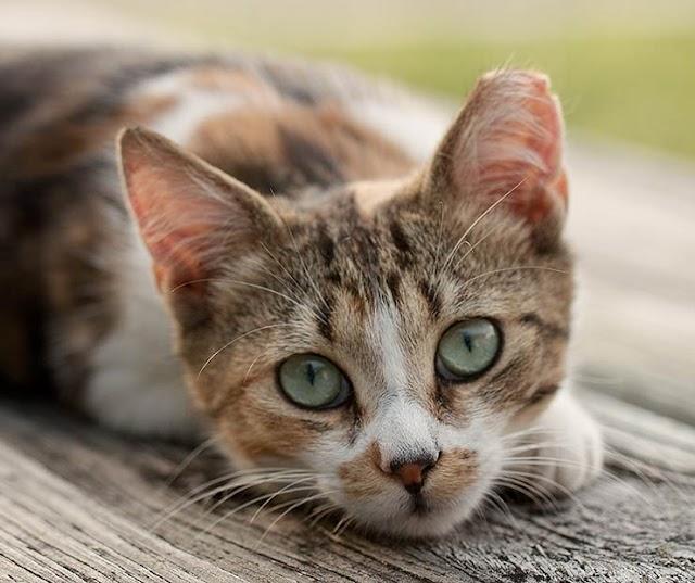 Μια γάτα μπορεί να σας επισκεφτεί και να ελέγξει την υγεία σας