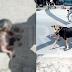 (Video) Anjing Gonggong Mayat Bayi