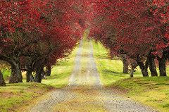Photo Credit: Crimson Canopy by Ian Sane on Flickr Creative Commons