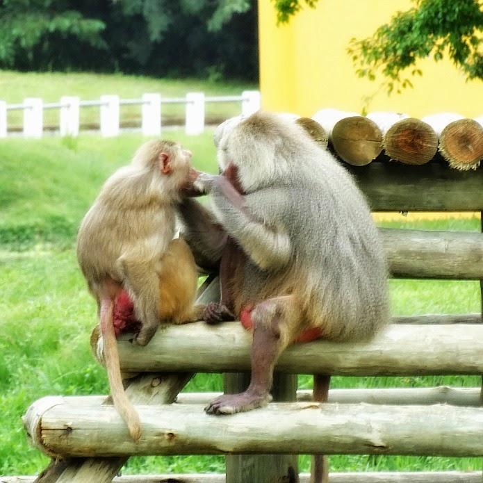 Centro de Primatologia, no Beto Carrero World