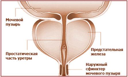 симптомы причины лечение простатита