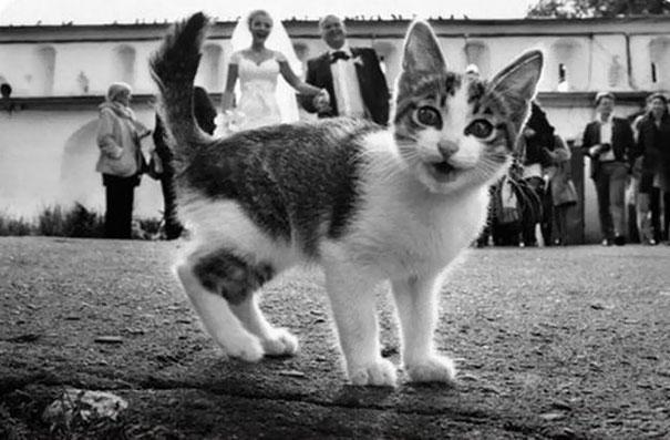 Cách lũ mèo khiến bạn làm nền trong mọi bức ảnh