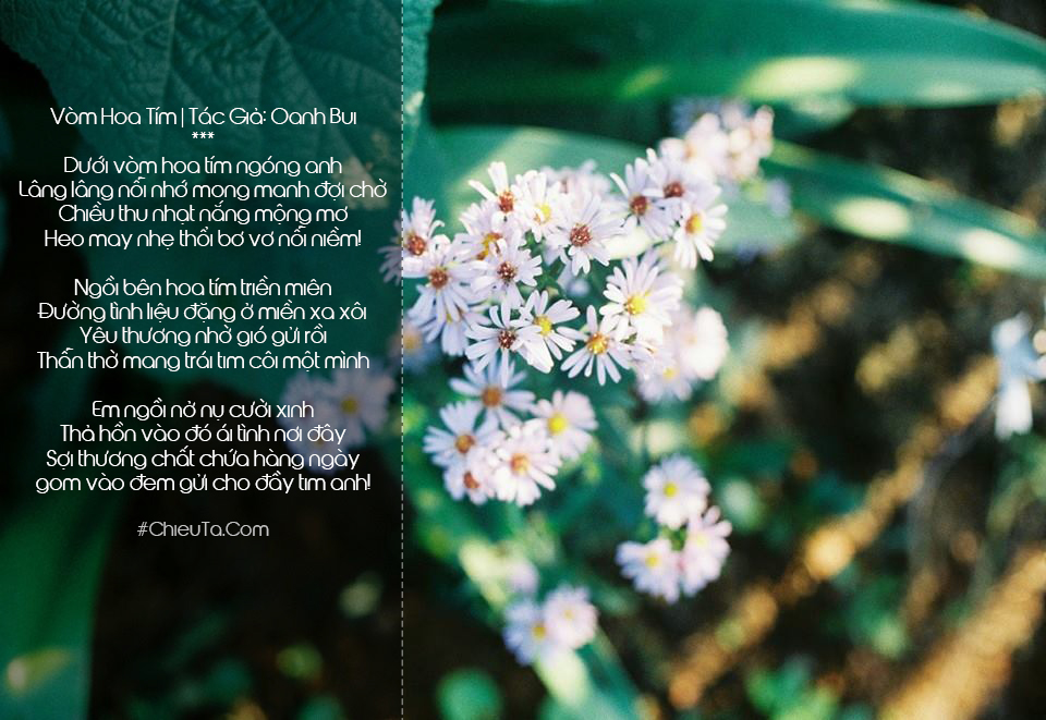 Thơ Về Hoa Tím, Chùm Thơ & Câu Thơ Hay Về Hoa Màu Tím Thủy Chung