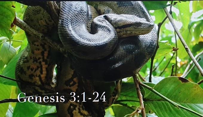 Gênesis 3 ( Yaratılış )