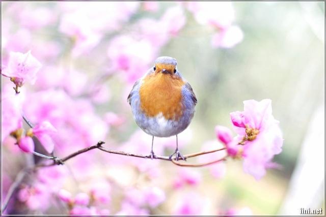 Chú chim non mùa xuân