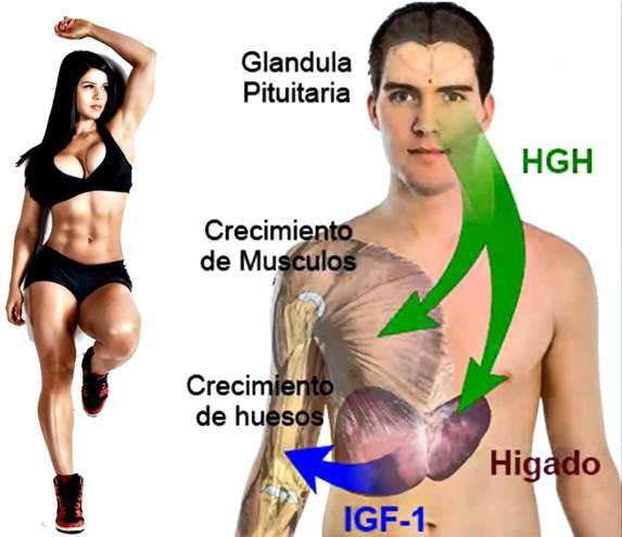 Aumenta la producción de hormona de crecimiento (GH) naturalmente