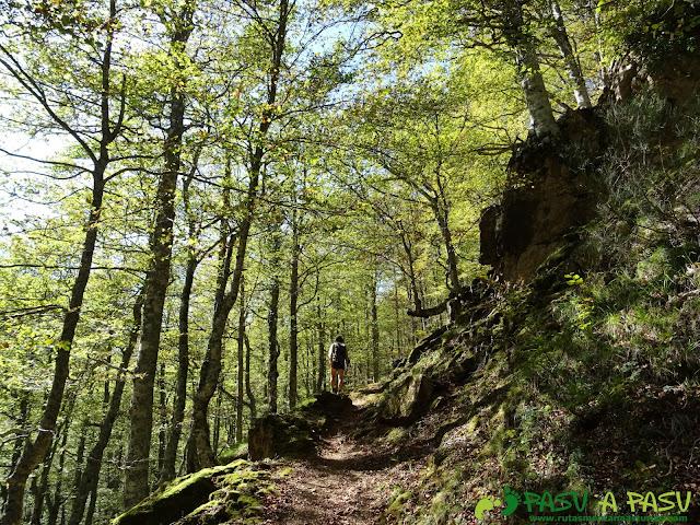 Bosque de Fabucao: Sendero entre hayas
