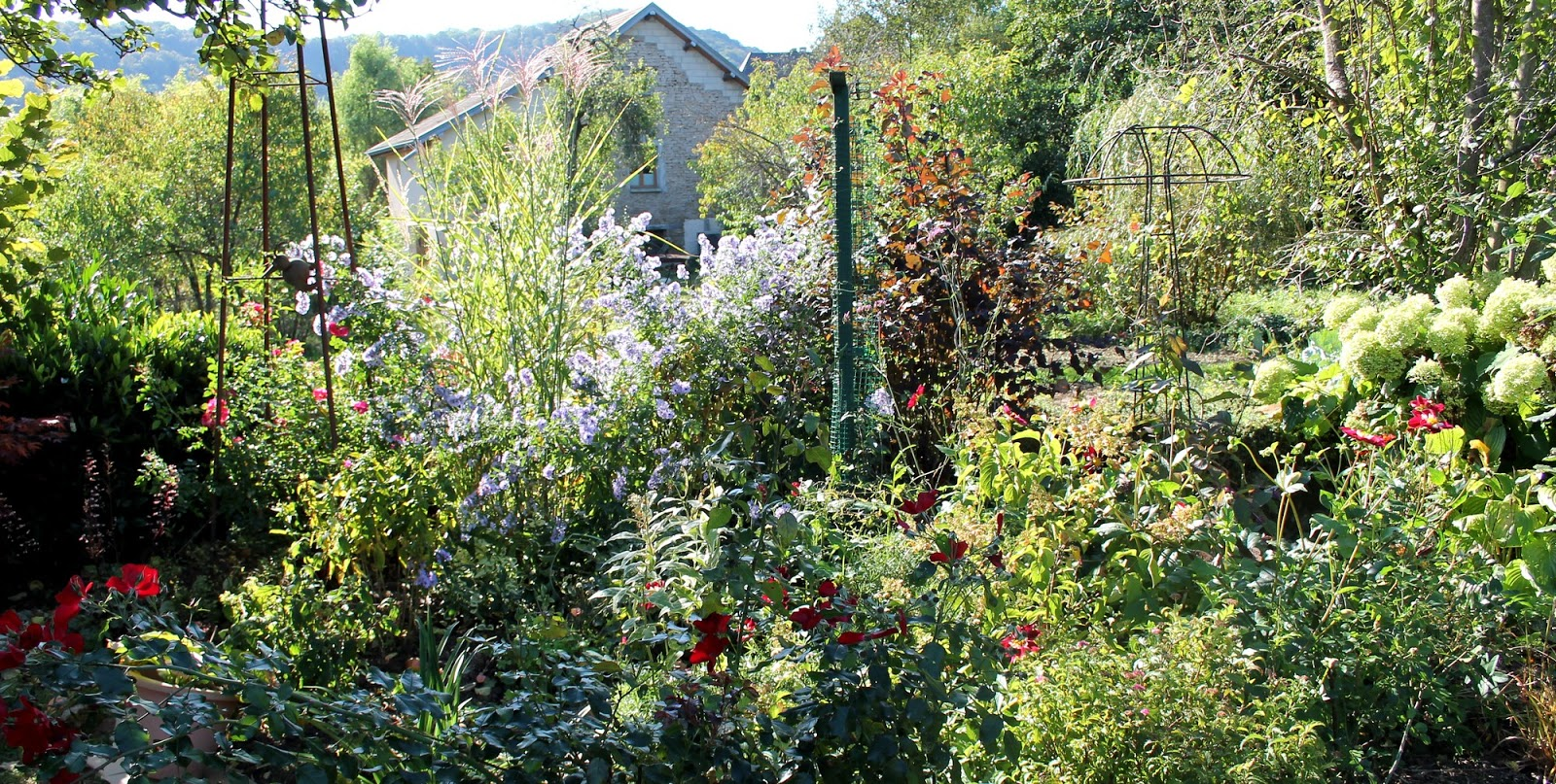 Doubs jardin mes asters 3 partie for Jardin octobre