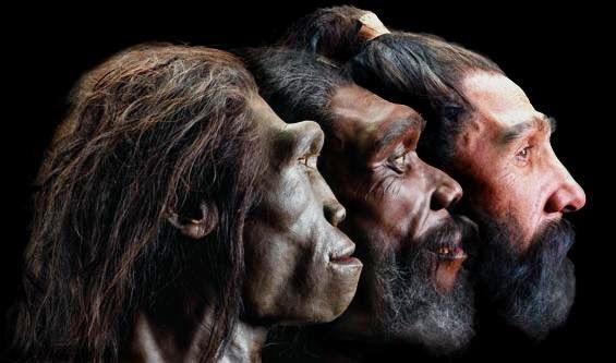 Image result for evolucionismo