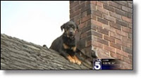 Picture of dog on roof