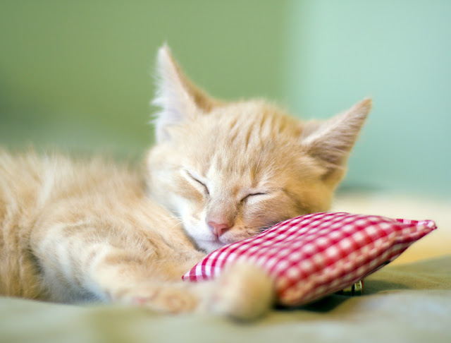Worm Medicine For Cats