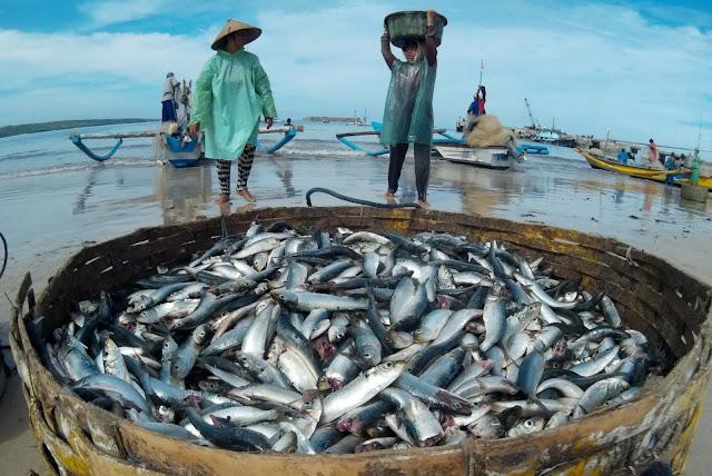 Jelang Tahun Baru, Harga Ikan di Abdya Mahal
