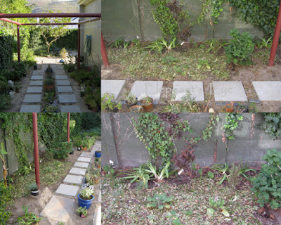 Newly planted at Cornish Stripe