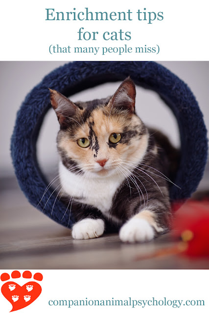 How to provide enrichment for your cat, and the tips that many people miss which will make your cat happier, illustrated by a beautiful cat in a cat tunnel