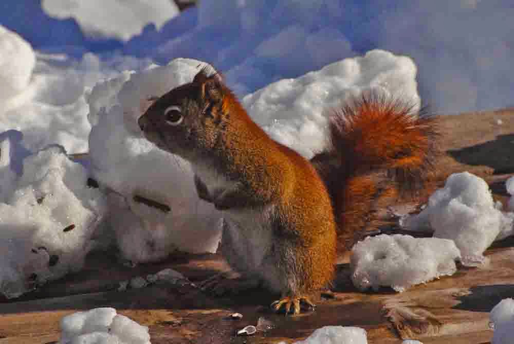 Seasons in the Valley + Furry Gnome's Adventures: Red Squirrel