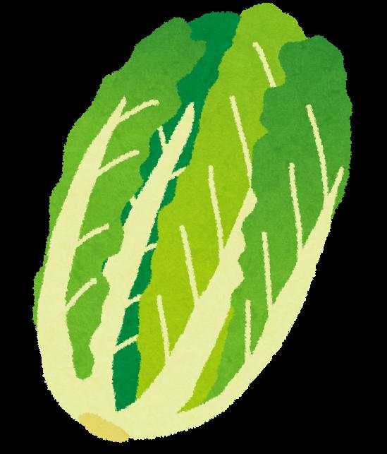 白菜のイラスト(野菜) | かわいいフリー素材集 いらすとや