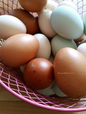 Clean eggs from pet hens to sell.