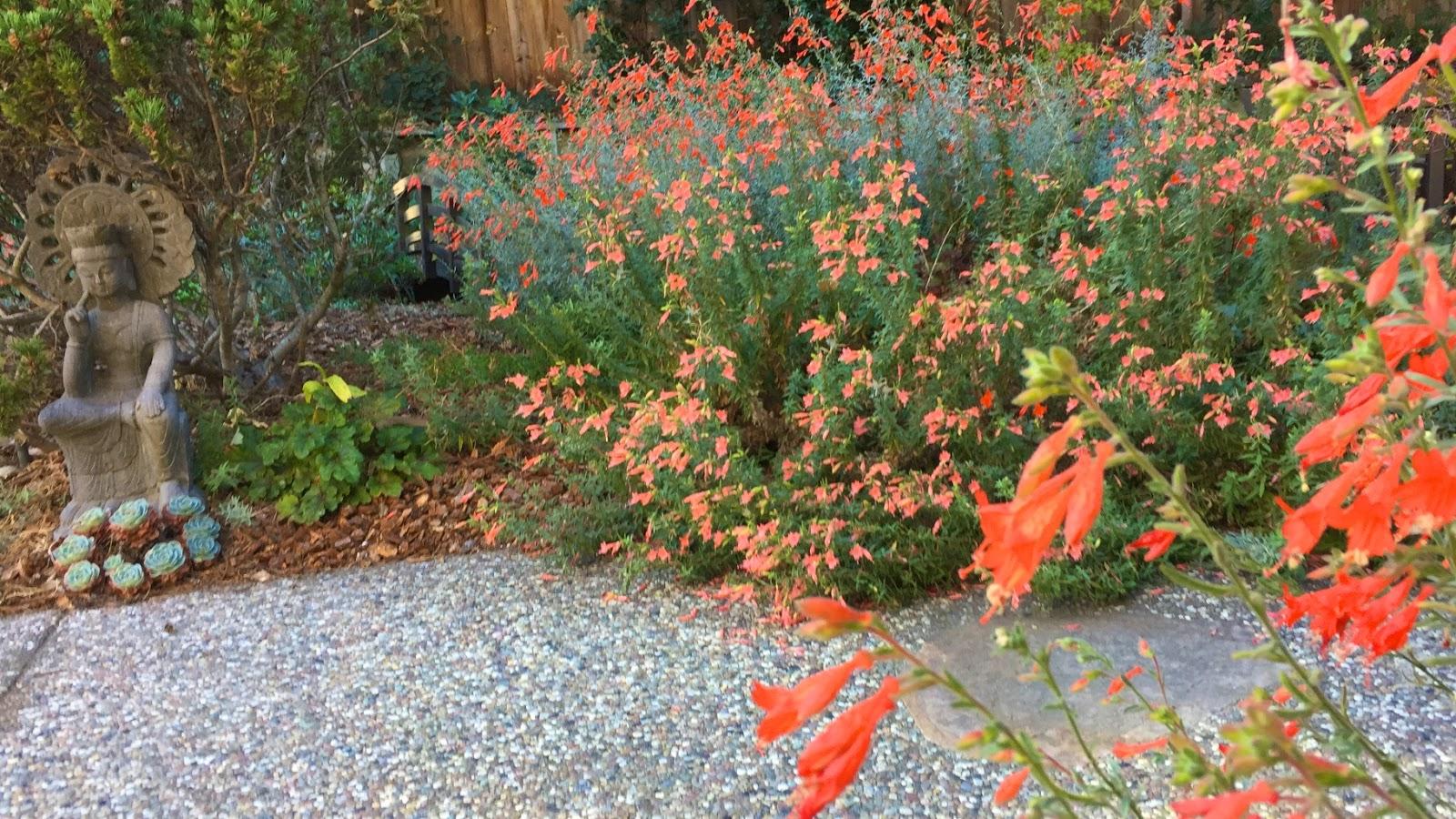 Fall Blues? California Fuchsia to the Rescue