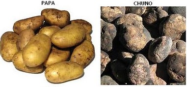 Agricultura Cultura Tiahuanaco (Papa, chuño)