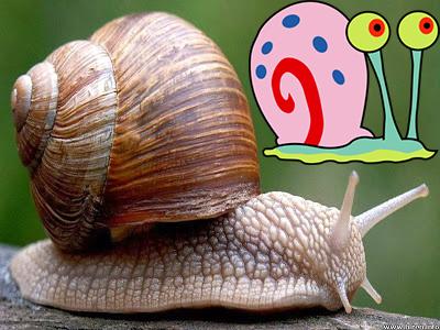 Ciri-Ciri dan Contoh Mollusca Lengkap - Sebutkan Apa
