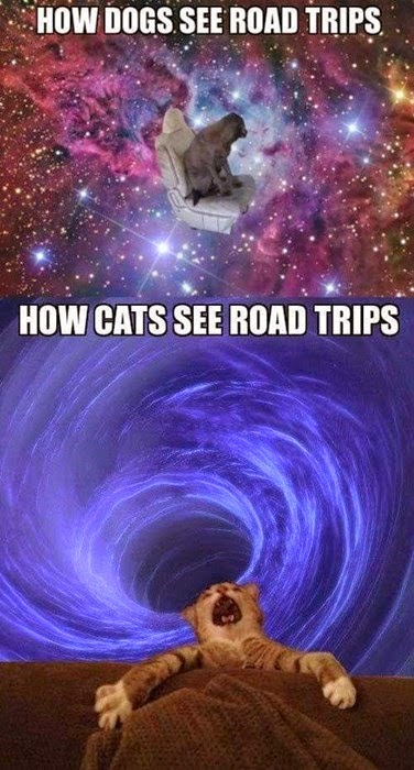 dogs like travelling in cars but cats hate it sucked into black hole