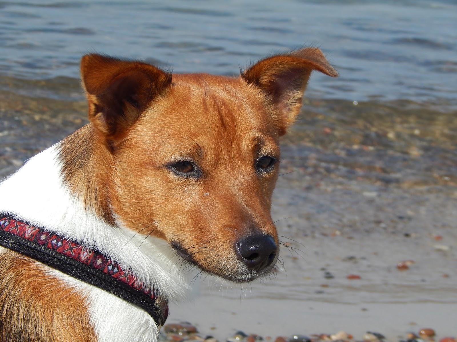 Teddy na pláži