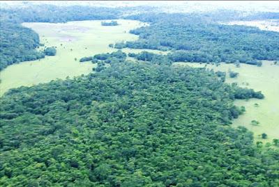 Leilão na Amazônia gera protestos no Brasil e no mundo