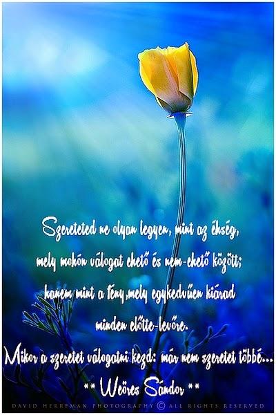 szép idézetek szeretetről Szép idézetek, bölcsességek   Márta képes gyűjteményéből: A